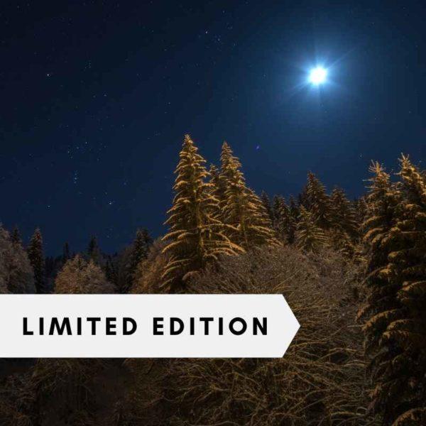 moonlit-christmas-fir