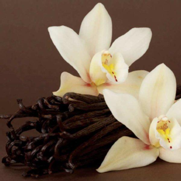 Vanilla Silk