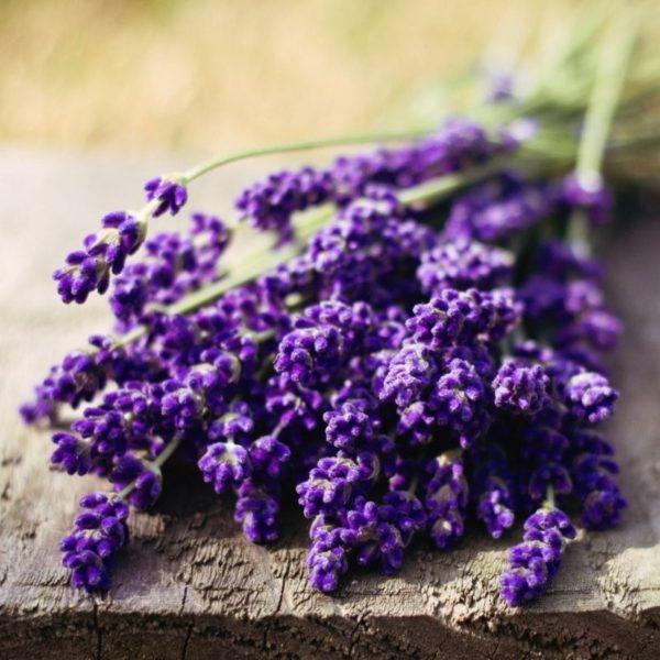lavender-fragrance-2