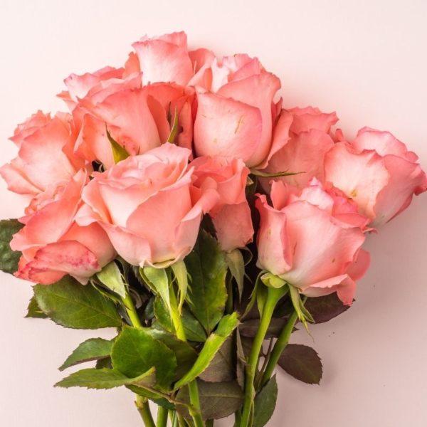 modern-rose-fragrance